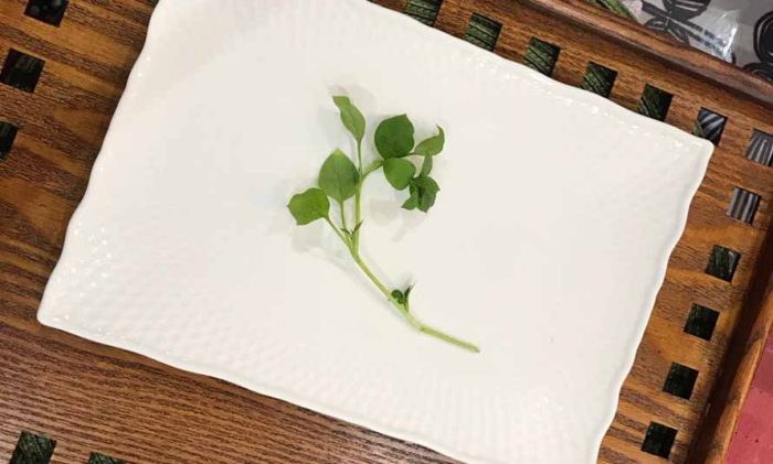 繁縷(はこべら)春の七草